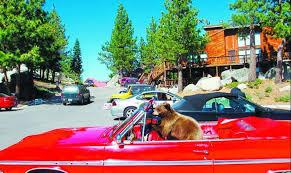 Car Bear