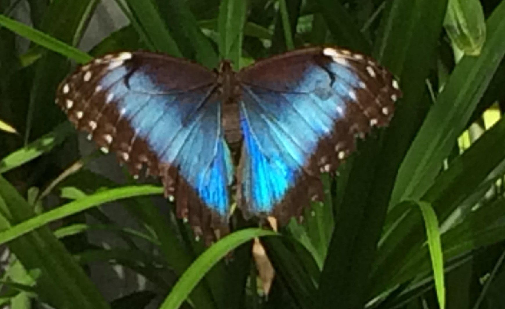 Rescued Butterfly 3