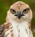 cropped-bird-of-prey.jpg
