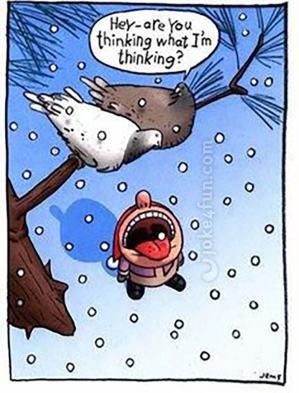 Pigeon Revenge