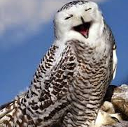 cropped-laughing-owl